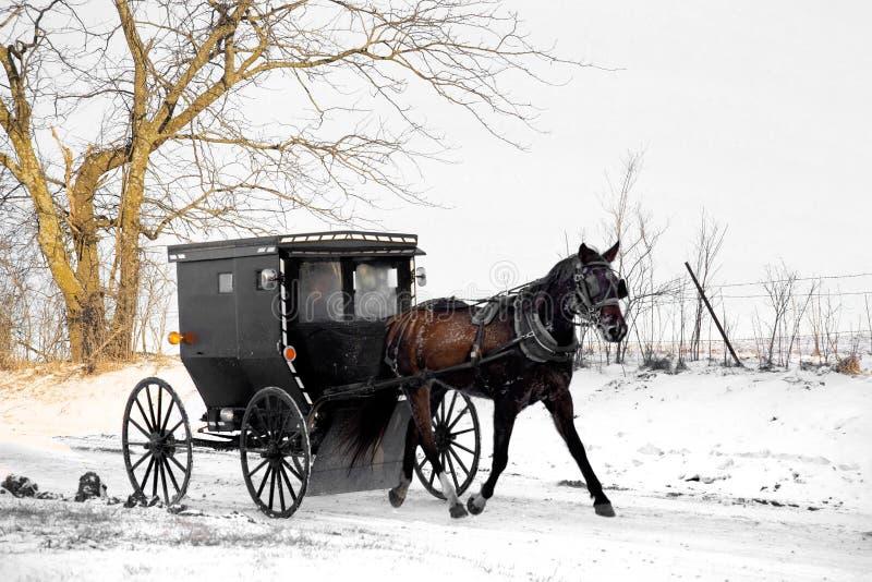 Cavallo e buggy dei Amish immagini stock