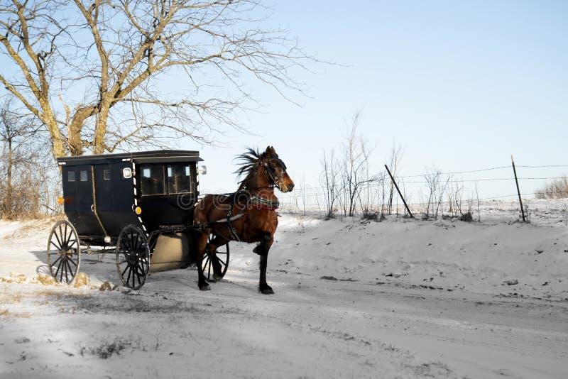 Cavallo e buggy dei Amish fotografia stock libera da diritti