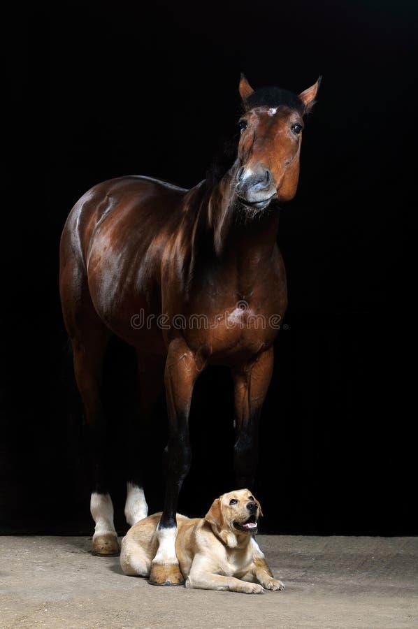 Cavallo e cane del Brown sui precedenti neri fotografia stock libera da diritti