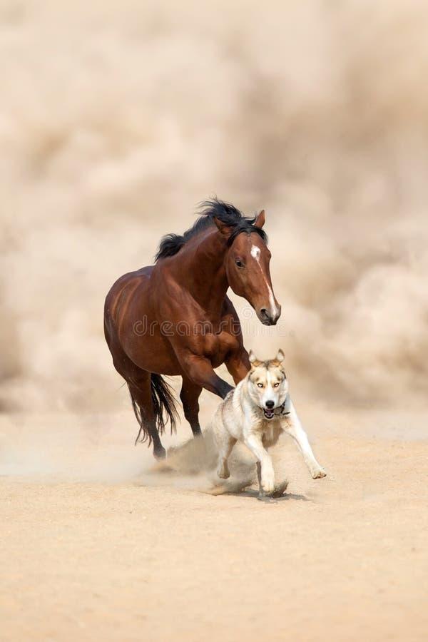 Cavallo e cane in deserto immagini stock libere da diritti