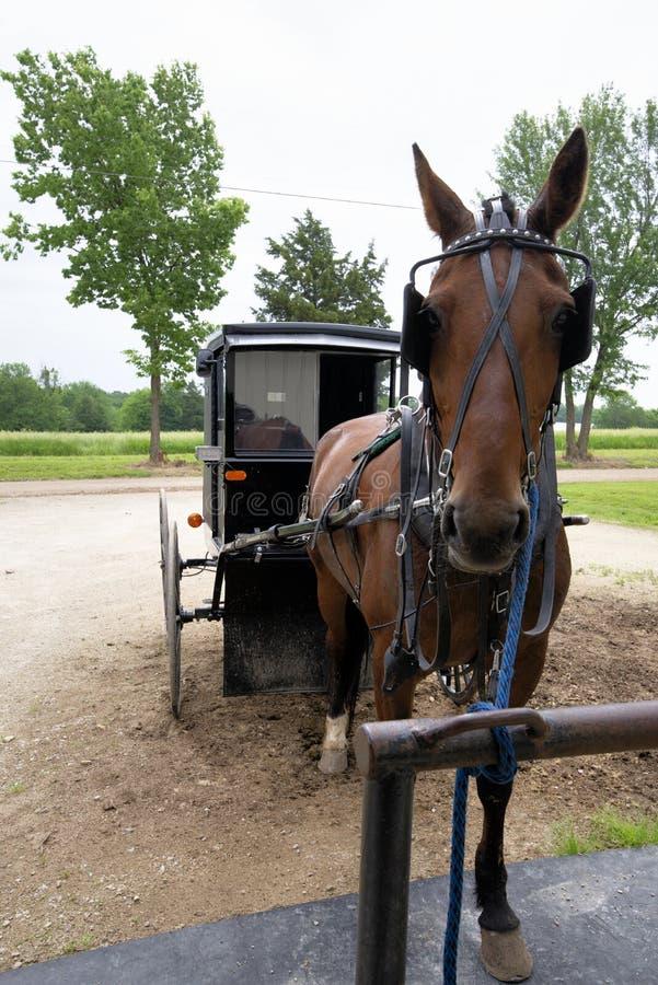 Cavallo e carrozzino di Amish, legati fotografia stock