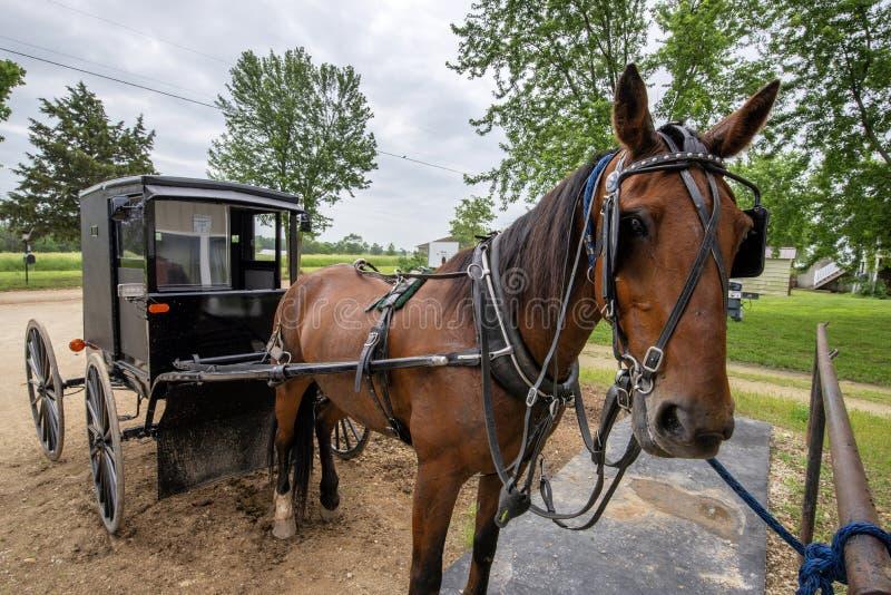Cavallo e carrozzino di Amish, legati immagini stock libere da diritti
