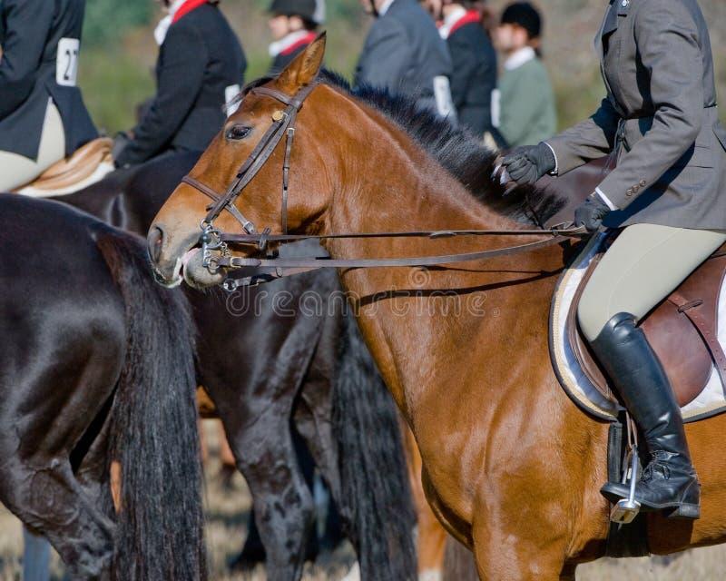 Cavallo e cavaliere immagine stock
