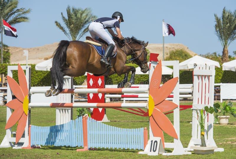 Cavallo e cavaliere che saltano nella concorrenza equestre fotografia stock libera da diritti