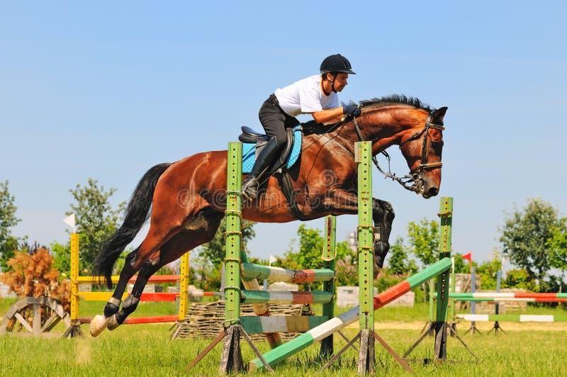 Cavallo e cavaliere di baia sopra un salto fotografie stock libere da diritti