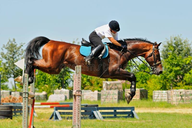 Cavallo e cavaliere di baia sopra un salto immagini stock libere da diritti