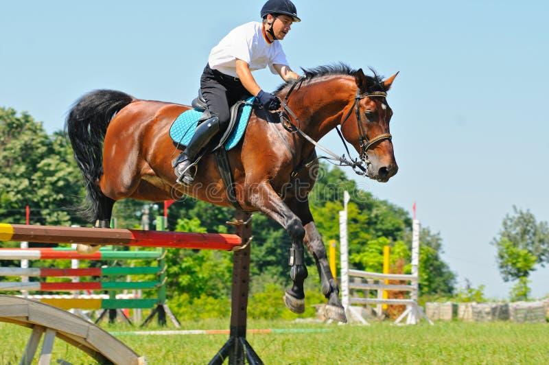 Cavallo e cavaliere di baia sopra un salto fotografia stock libera da diritti