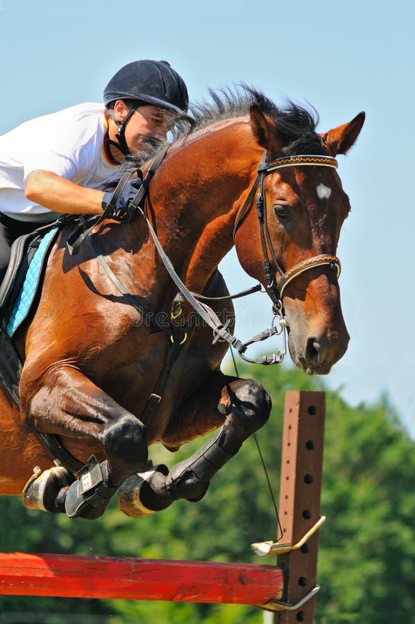 Cavallo e cavaliere di baia sopra un salto fotografie stock