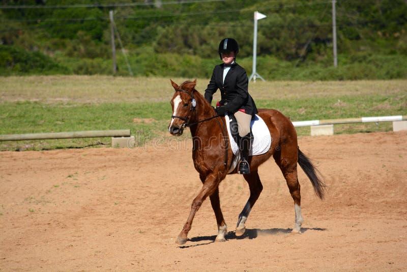 Cavallo e cavaliere nell'arena di dressage fotografia stock