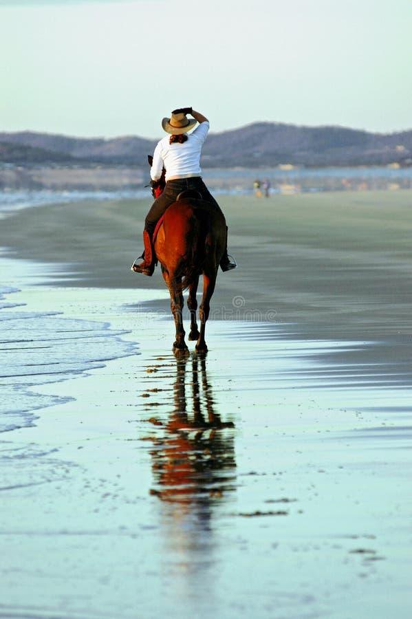 Cavallo e cavaliere sulla spiaggia immagine stock libera da diritti