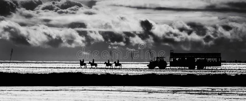 Cavallo e trattore immagine stock