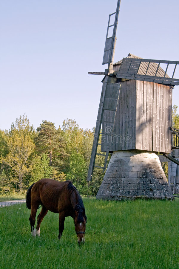 Cavallo e vecchio mulino a vento immagine stock