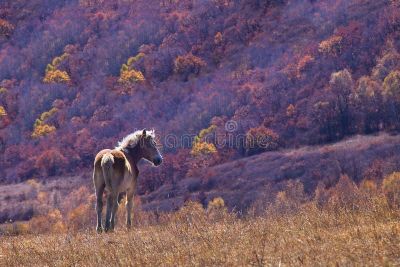 Cavallo ed albero fotografie stock
