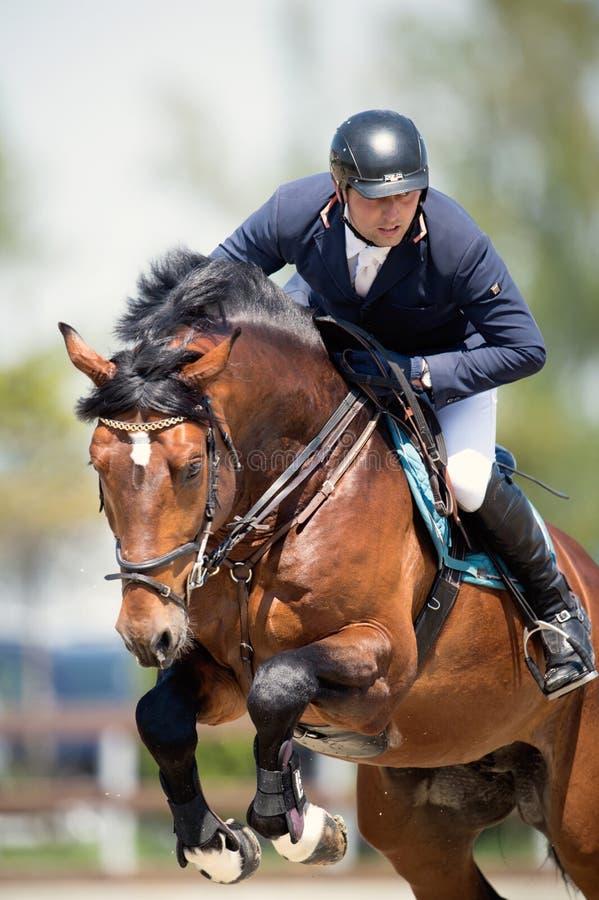 Cavallo equestre Rider Jumping Rappresenti la mostra del concorrente che esegue nella concorrenza di salto di manifestazione fotografia stock libera da diritti