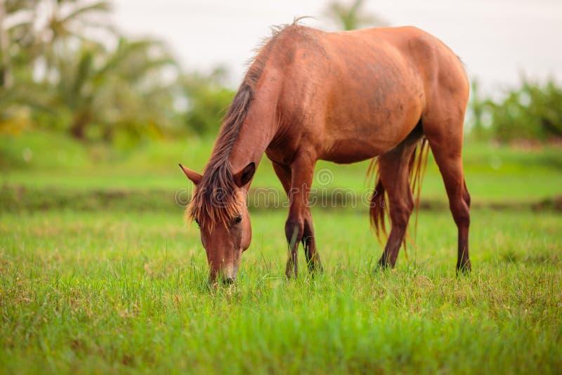 Cavallo felice di Brown immagine stock