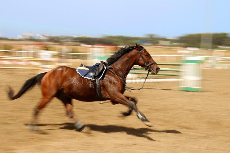 Cavallo galoppante all'ippica immagini stock
