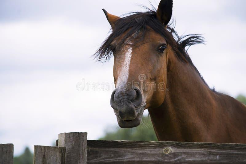 Cavallo grazioso su un'azienda agricola fotografia stock libera da diritti