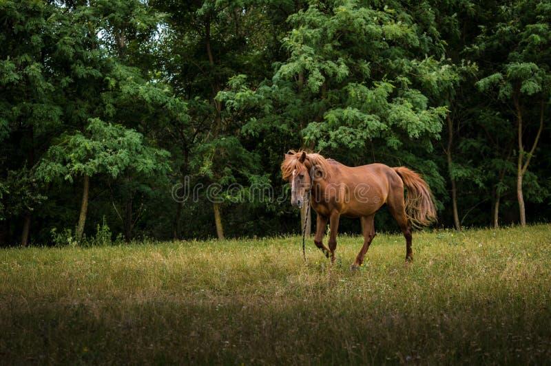 Cavallo in natura fotografie stock