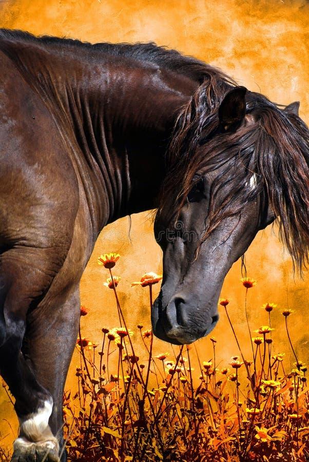 Cavallo nei campi