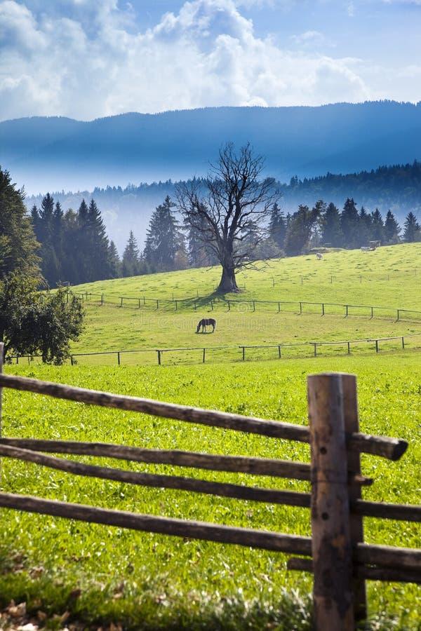 Cavallo nel campo verde immagine stock libera da diritti