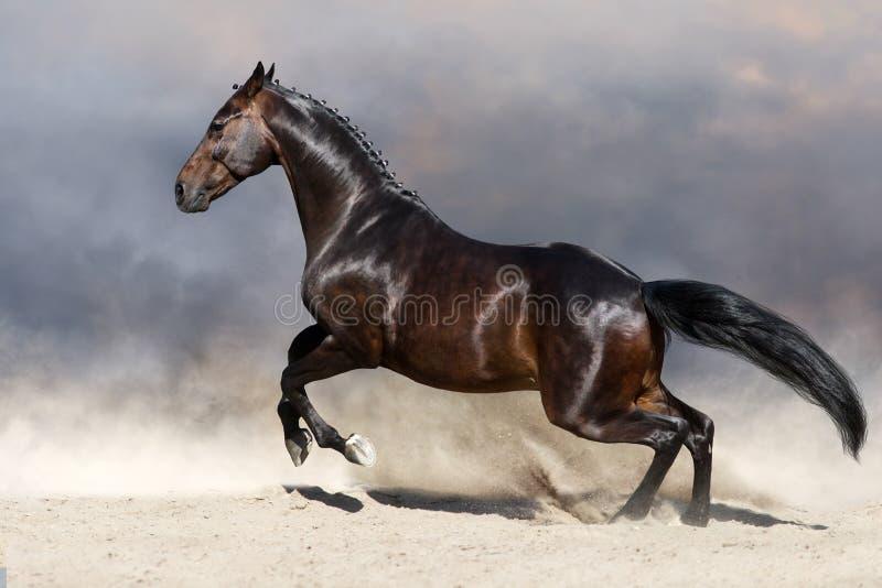 Cavallo nel moto immagine stock libera da diritti