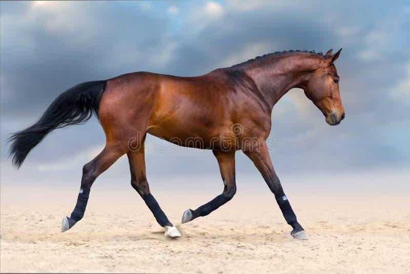 Cavallo nel moto immagini stock libere da diritti