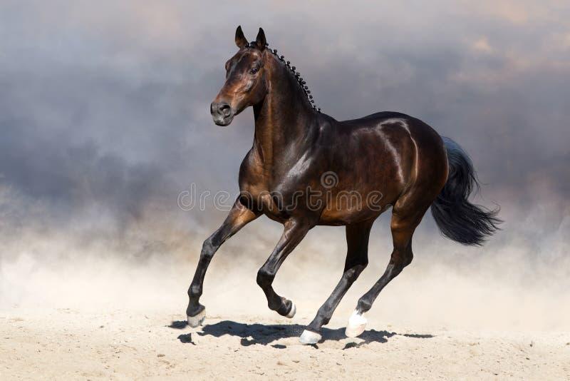 Cavallo nel moto immagine stock