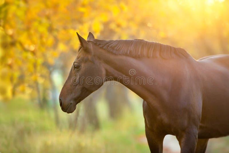 Cavallo nel paesaggio di autunno immagini stock