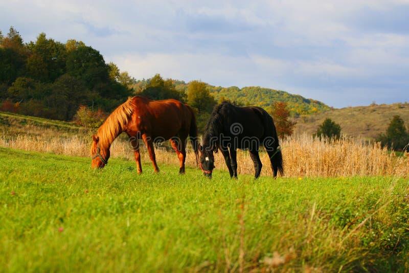 Cavallo nel tramonto fotografia stock libera da diritti