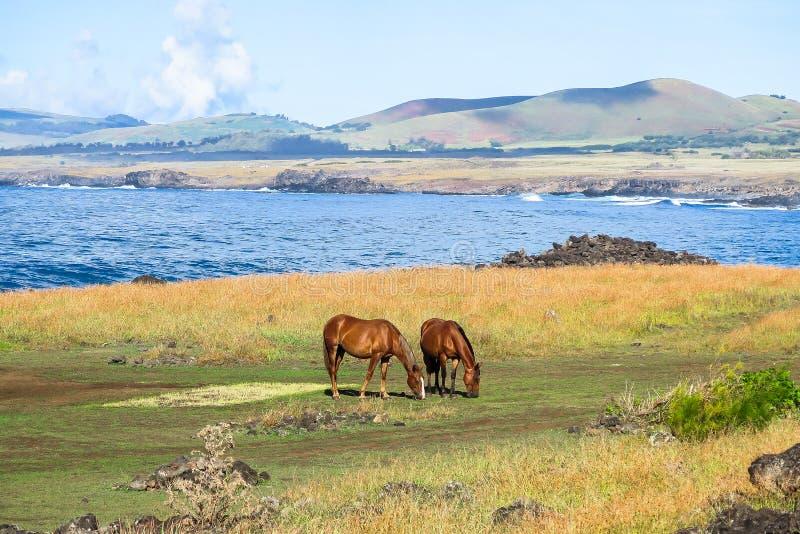 Cavallo nell'isola di pasqua, Cile fotografia stock