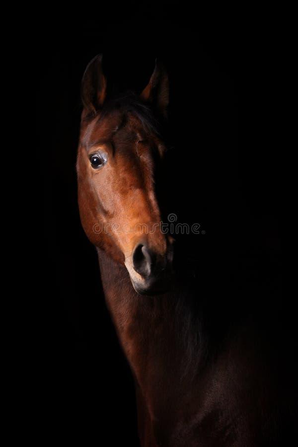 Cavallo nello scuro immagine stock libera da diritti