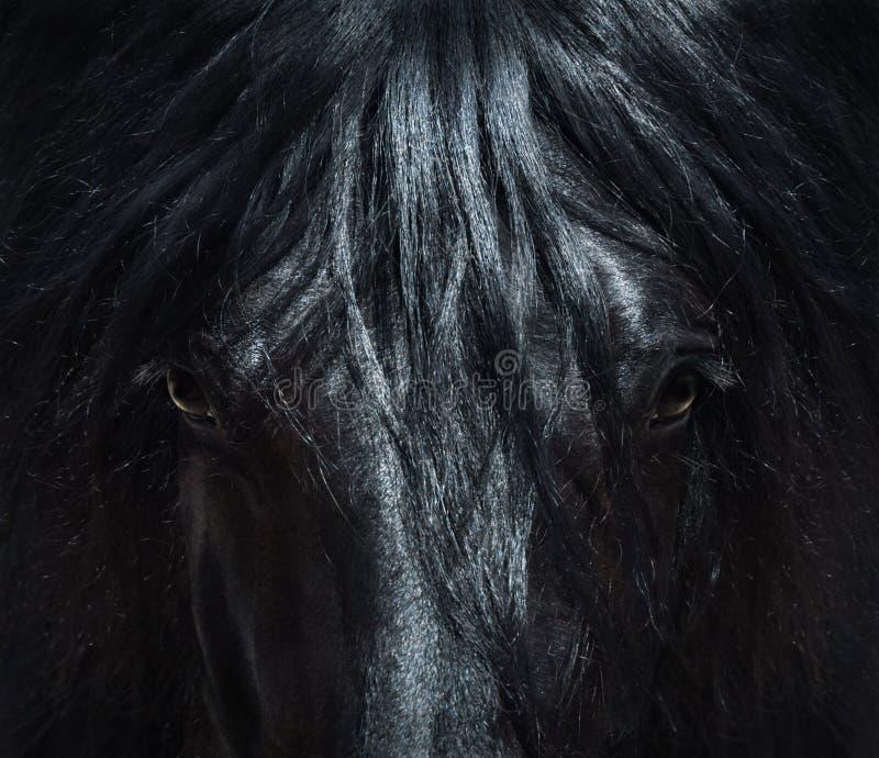 Cavallo nero andaluso con la criniera lunga Alto vicino del ritratto fotografia stock libera da diritti