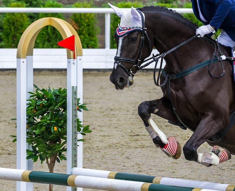 Cavallo nero e ragazza di dressage che eseguono salto alla concorrenza di salto di manifestazione fotografie stock libere da diritti