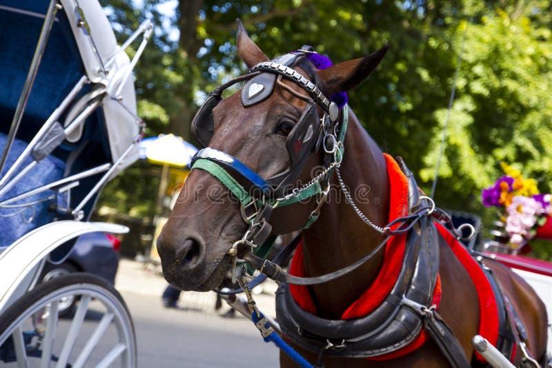 Cavallo in New York immagini stock libere da diritti