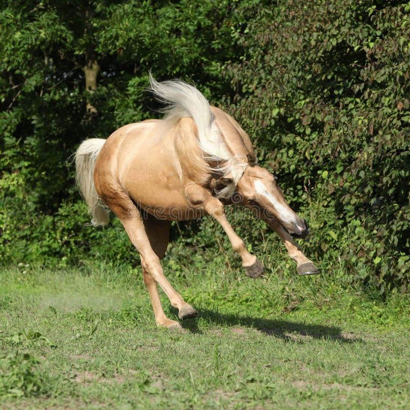 Cavallo piacevole del palomino con funzionamento biondo lungo della criniera immagini stock