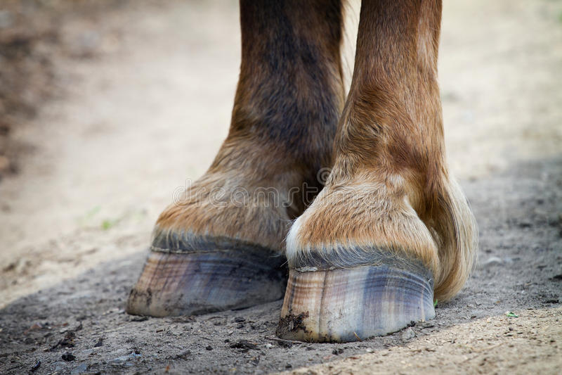 Cavallo posteriore degli zoccoli immagine stock libera da diritti