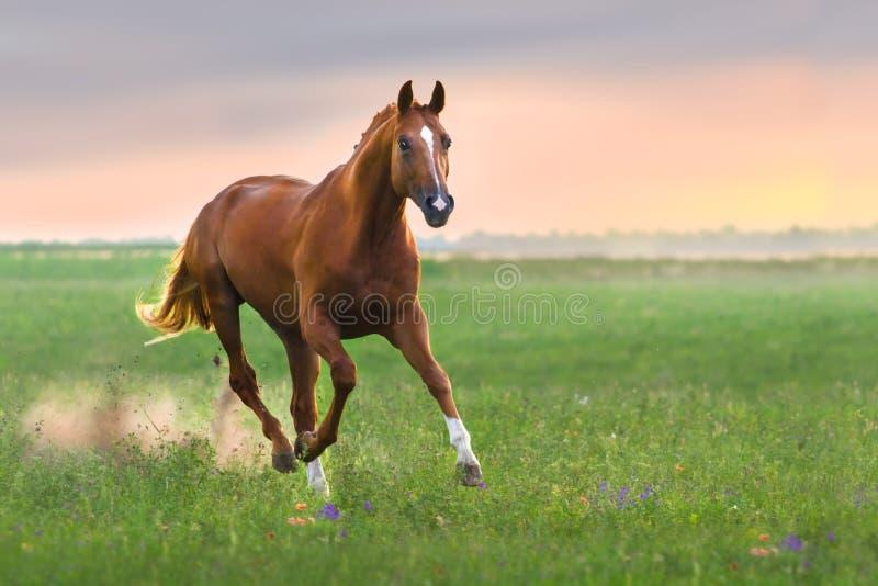 Cavallo rosso fotografia stock