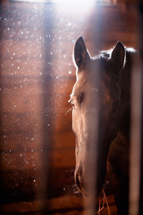 Cavallo in scuderia immagini stock
