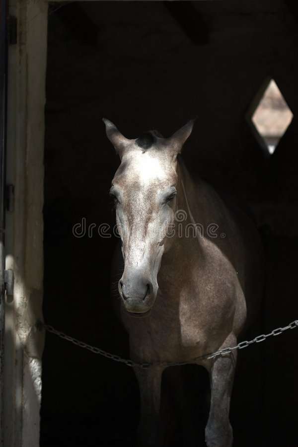 Cavallo in scuderia fotografia stock
