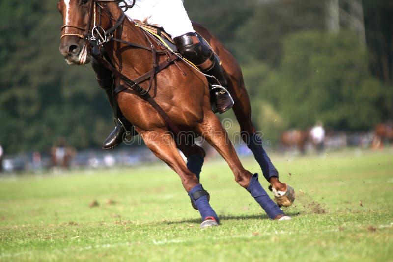 cavallo selvaggio immagini stock libere da diritti