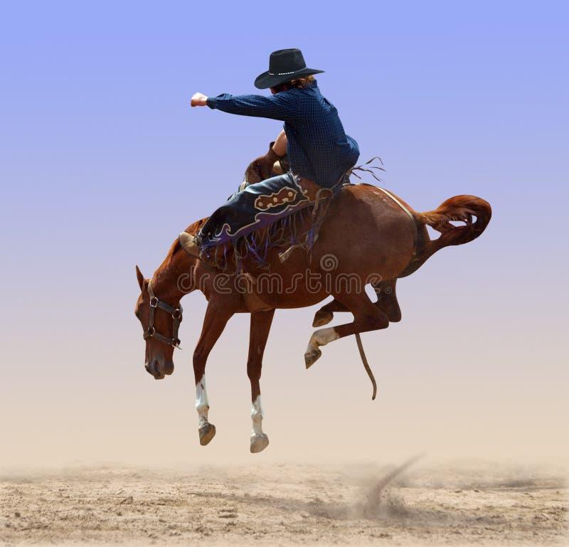 Cavallo selvaggio disperso nell'aria del rodeo fotografie stock libere da diritti