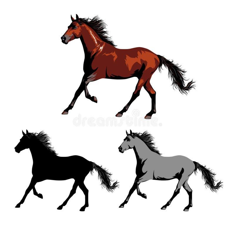 Cavallo selvaggio o addomesticato colore ed il nero animale fotografie stock