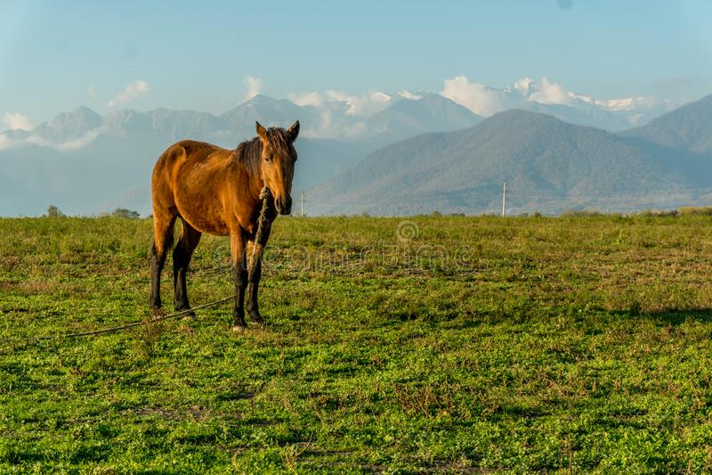 Cavallo solo su un orizzonte verde del prato con le montagne di punta nevose distanti Ampio paesaggio senza fine con luce solare  immagini stock