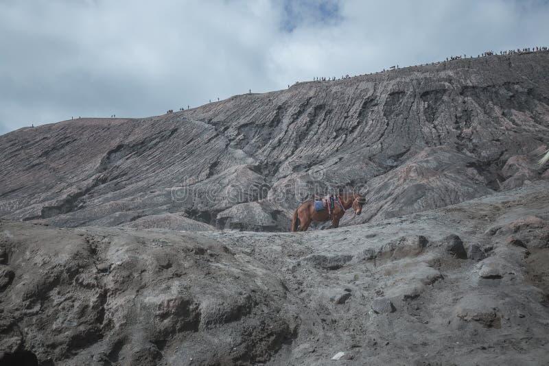 Cavallo solo sul bello vulcano attivo con il supporto Bromo del fumo fotografia stock