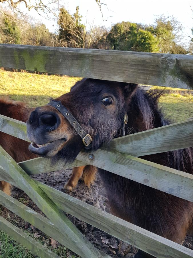 Cavallo sorridente immagine stock libera da diritti