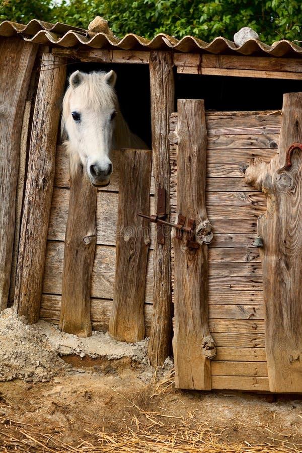 Cavallo stabile fotografie stock libere da diritti