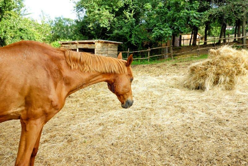 Cavallo Straw Stable Goal immagine stock libera da diritti