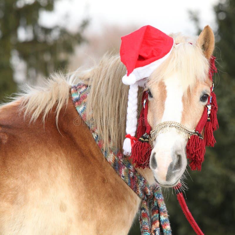 Cavallo stupefacente con il cappello ed i regali di natale fotografia stock
