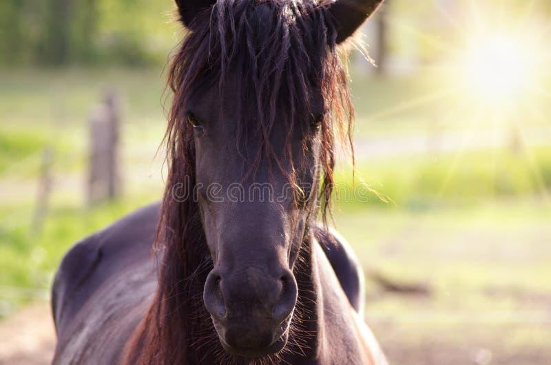 Cavallo su estate del pascolo che anche vicino al tramonto fotografia stock libera da diritti