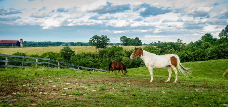 Cavallo su un'azienda agricola nel Kentucky immagine stock libera da diritti